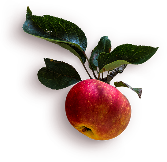 red-apple-with-stem-6